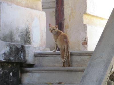 2012-01-23 MEXICO 244