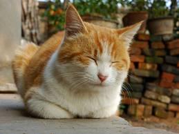 cat blink
