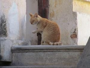 2012-01-23 MEXICO 245