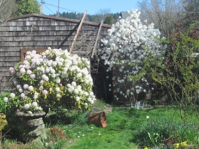 ~Outside~ A Rare Spring Day in Portland