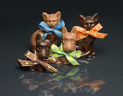 cat chocolate