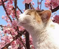 cat spring 2
