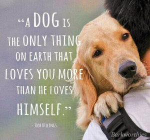 Dog loves you more