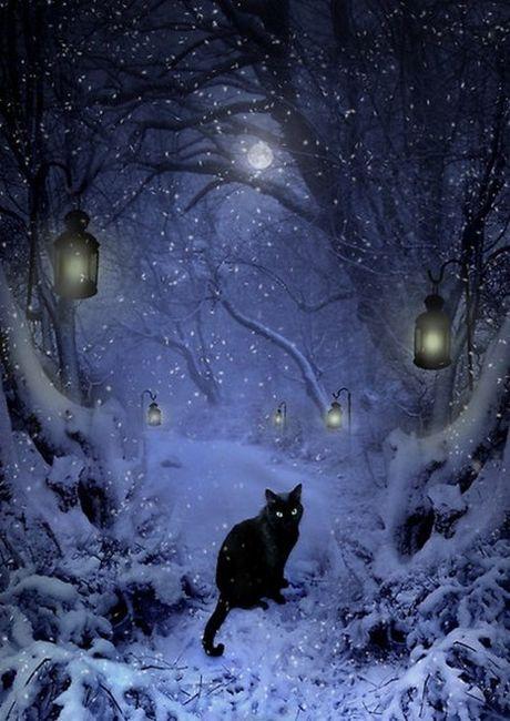 Norwegian Forest Cat, kitten in winter snow scene. Date ...  |Winter Scenes With Cats