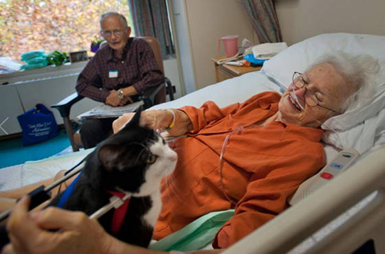 animal assisted activity among patients with cancer Animal-assisted activity among patients with larger sample to determine applicability of animal-assisted activity in patients with cancer who are undergoing.