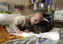 PET PARTNERS CAT 6 meet-huck-finn-the-therapy-cat