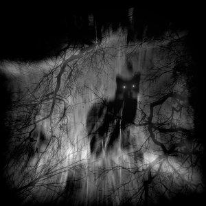 shadow_cat_by_lostknightkg