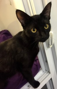 Dorothy - Awaiting a home at the Mayhew