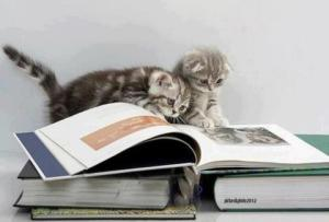 Cats-Reading-Books