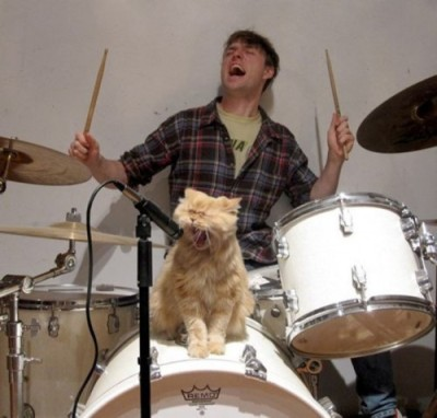 funny-cat-singing-microphone-drums