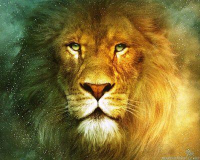 beautiful-lion-wallpapers-1280x1024