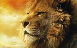 nature%20animals%20wildlife%20lions%201919x1200%20wallpaper_www_animalhi_com_45