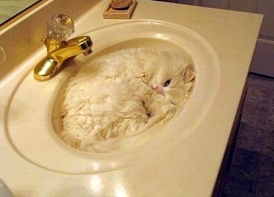 A-sink-full-of-cat-l