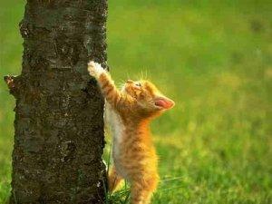 cat-climbing-tree