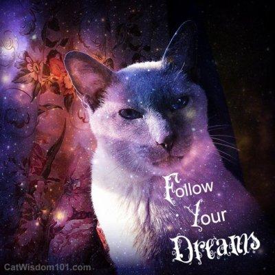 cat-merlin-follow-your-dreams