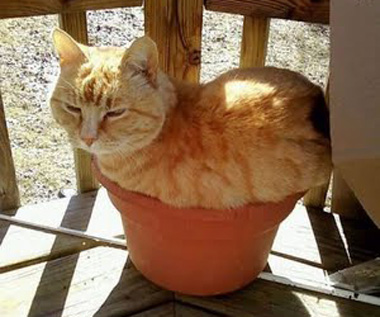 cat-sleeping-in-flower-pot