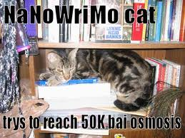 nanowrimo-cat