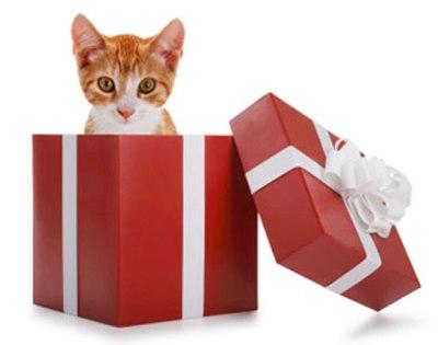 gift_cat