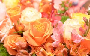 placid flowers_close_up