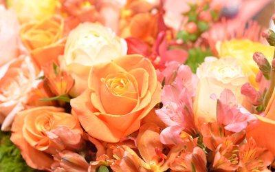 placid flowers_close_up