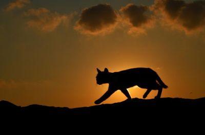 Cat at Sunset, by Serkan Sarikef