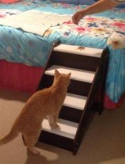 CAT STEPS - Copy