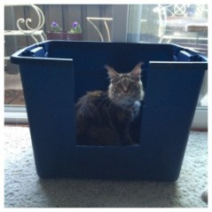 TOTE LITTER BOX2 - Copy