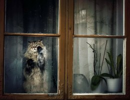 animals-looking-through-the-window-4