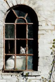 two-of-my-favorite-things-old-windows-amp-cats-beautiful-cat-doors-windows-white-cats-old-windows-window-cats-kitty-animal