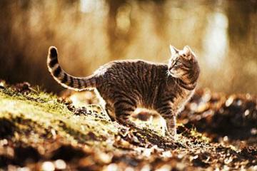 145485-425x283-lost_cat