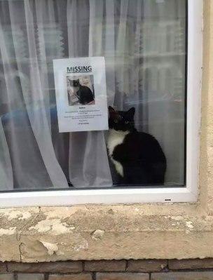 cat-indoors