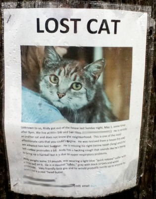 lost-cat-andy