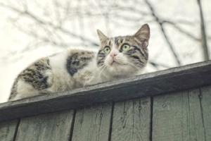 lost-cat-austin-roof