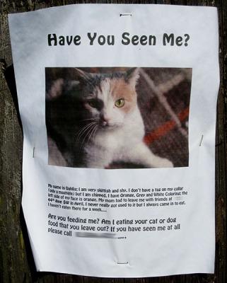 lost-cat-poster-dahlia