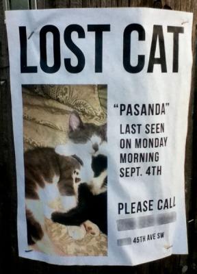 lost-cat-poster-pasanda-seattle-wa-092511