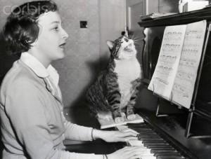 Singing Cat On Piano