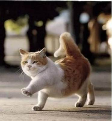 117486-cats-cute-cat
